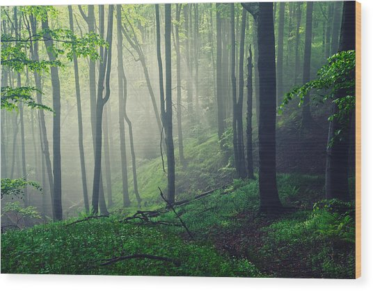 Living Forest Wood Print