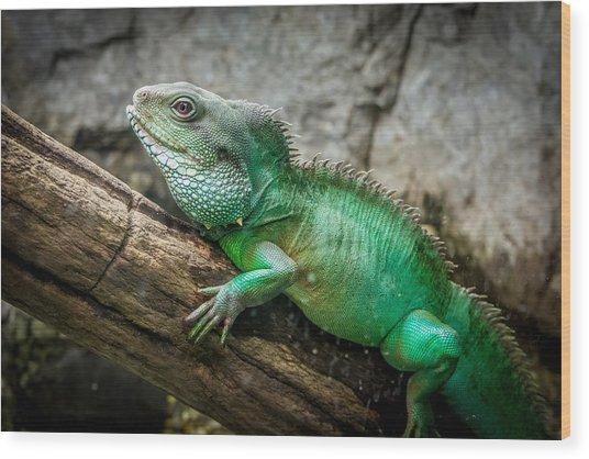 Lizard On Branch Wood Print