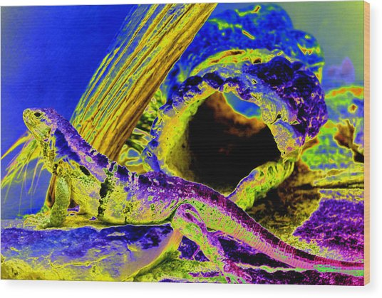 Lizard Wood Print by Peter  McIntosh