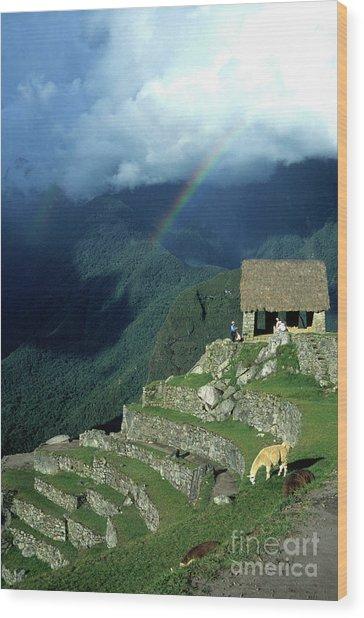 Llama And Rainbow At Machu Picchu Wood Print