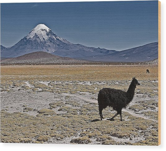 Llama And Sajama Wood Print
