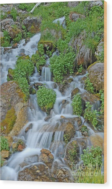 Logan Canyon Cascade Wood Print by Dennis Hammer
