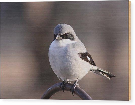 Loggerhead Shrike - Smokey Wood Print
