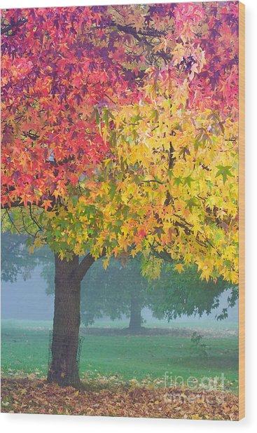 London Autumn Wood Print by David Bleeker