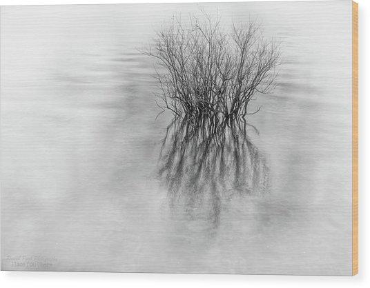 Lone Bush Wood Print
