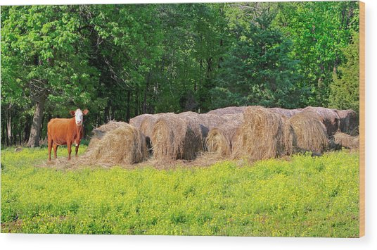 Lone Cow Guard, Smith Mountain Lake Wood Print
