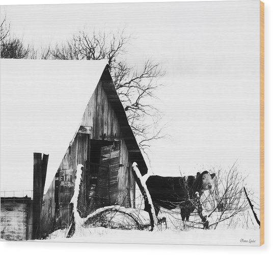 Lone Cow In Snowstorm Wood Print