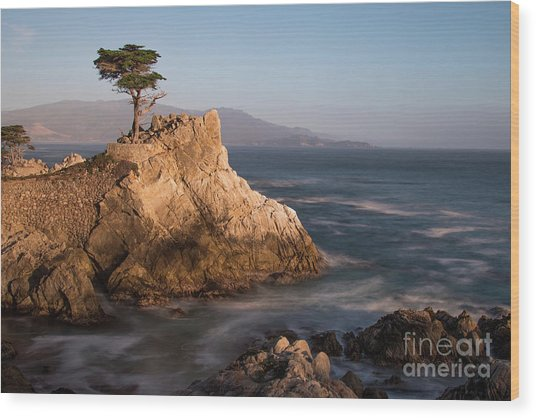 lone Cypress Tree Wood Print