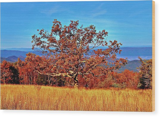 Lone Mountain Tree Wood Print