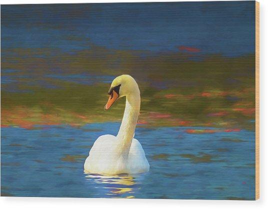 Lone Mute Swan. Wood Print