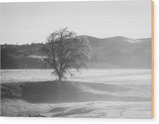 Lone Oak, Clearing Fog, San Andreas Rift Valley Wood Print