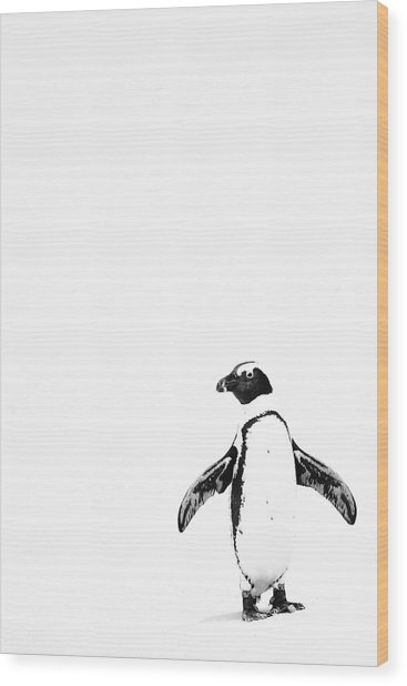 Lone Penguin Wood Print by Victoria Hillman