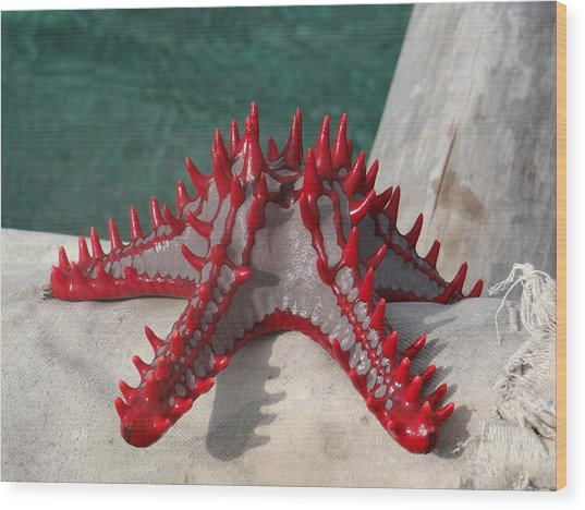 Lone Red Starfish On A Wooden Dhow 3 Wood Print