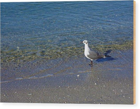 Lone Seagull At Miramar Beach In Naples Wood Print