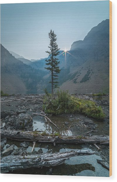 Lone Survivor // Bob Marshall Wilderness  Wood Print