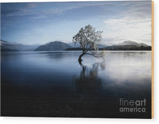 Wood Print featuring the photograph Lone Tree 2 by Scott Kemper