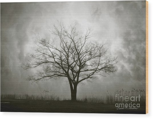 Lone Tree And Clouds Wood Print