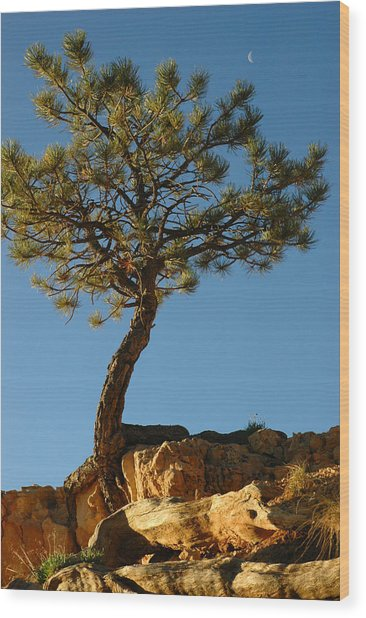 Lone Tree And Moon In Bryce Canyon Wood Print