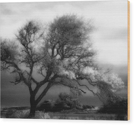 Lone Tree At Gulf Shores Wood Print