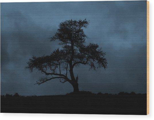 Lone Tree Blue Wood Print