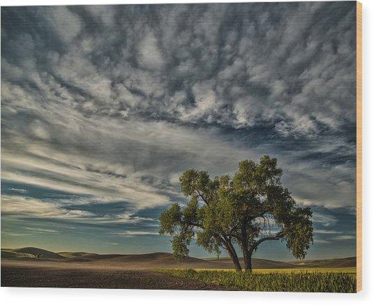 Lone Tree In Field Wood Print