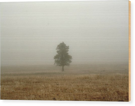 Lone Tree In Fog Wood Print