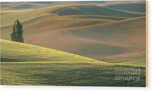 Lone Tree In The Palouse  Wood Print