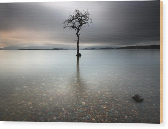 Lone Tree Loch Lomond Wood Print