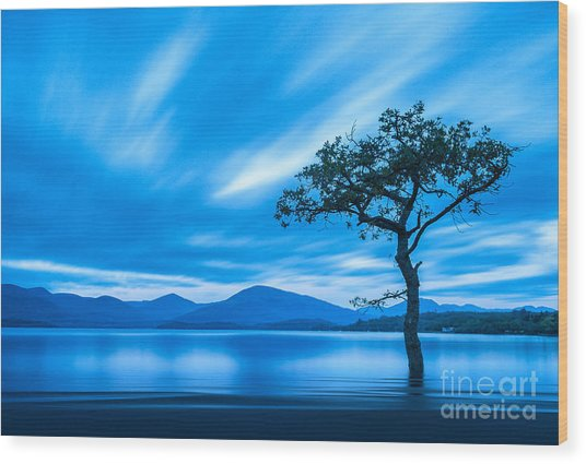 Lone Tree Milarrochy Bay Wood Print