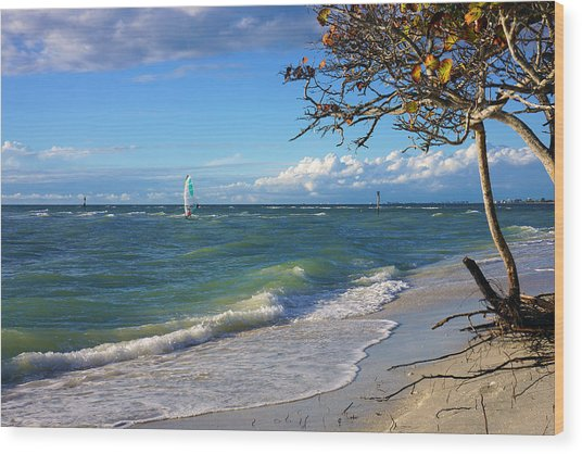 Lone Windsurfer At Wiggins Pass Wood Print
