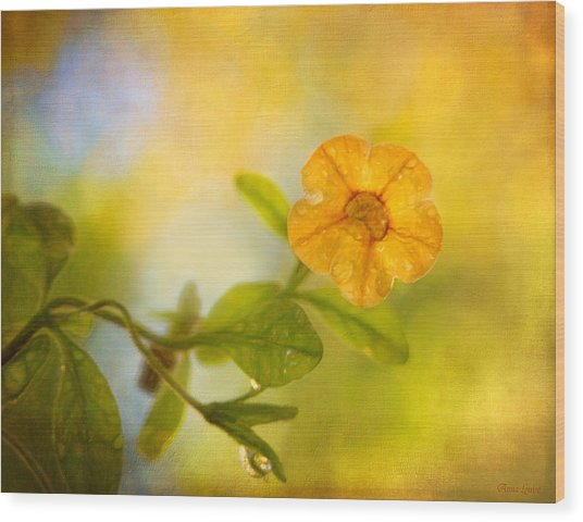 Lone Yellow Flower Wood Print