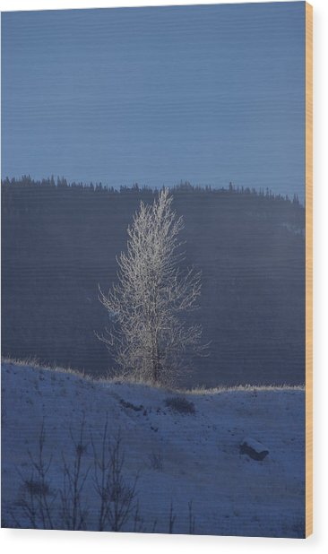Lonely Frosty Tree Wood Print