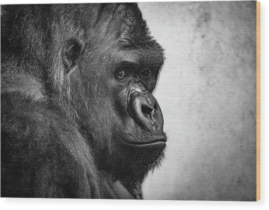 Lonely Gorilla Wood Print