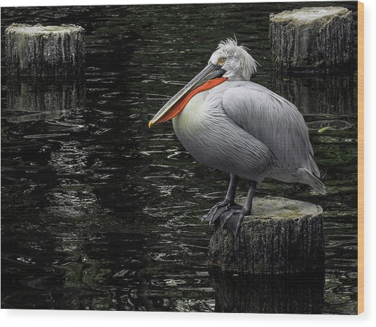 Lonely Pelican Wood Print