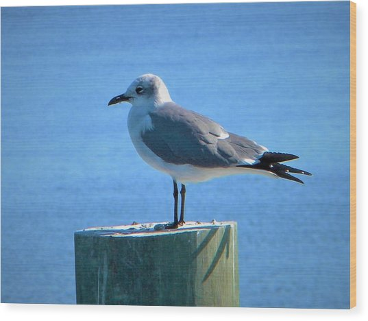 Lonely Seagull Wood Print