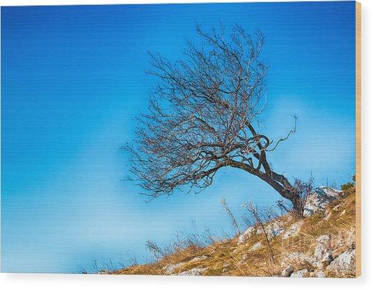 Lonely Tree Blue Sky Wood Print