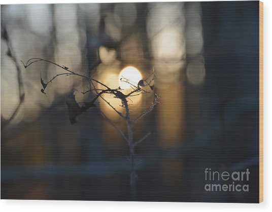 Lonely Tree Branch With Bokeh Love -georgia Wood Print