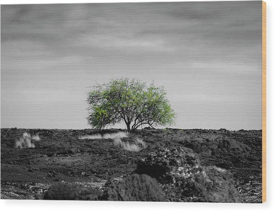 Lonely Tree Wood Print