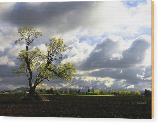 Lonely Tree Is The Summer Wood Print