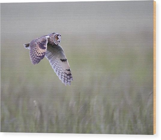Long Eared Owl Hunting At Dusk Wood Print