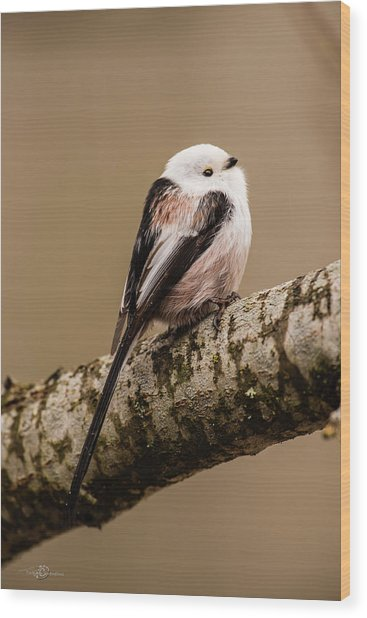 Long-tailed Tit On The Oak Branch Wood Print