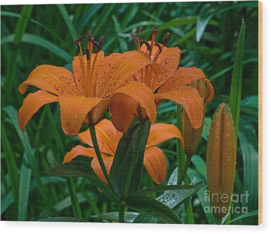 Long Valley Lily Wood Print