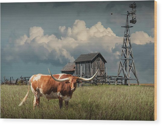 Longhorn Steer In A Prairie Pasture By Windmill And Old Gray Wooden Barn Wood Print