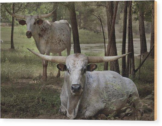 Longhorns On The Watch Wood Print