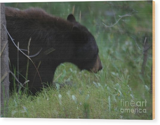 Looking For Lunch Wood Print by Robert Torkomian