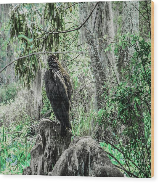 Looking For New Prey Wood Print