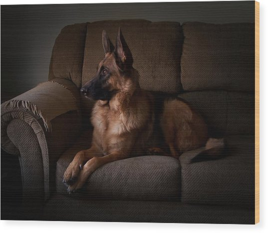 Looking Out The Window - German Shepherd Dog Wood Print
