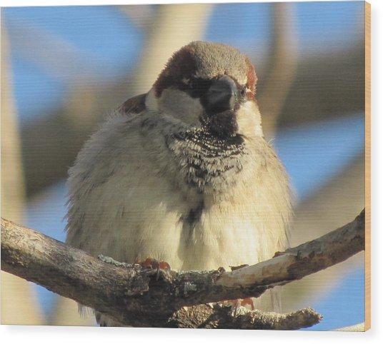 Looking Over The Nest Wood Print by Lisa Jayne Konopka