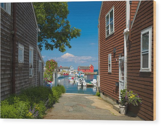 Looking Rockport Wood Print