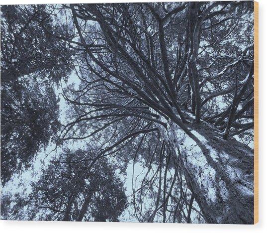 Looking Towards The Light Wood Print